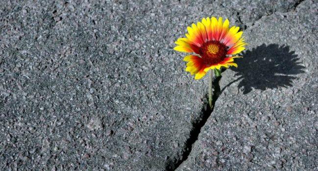 Recupero dal cancro con la Mindfulness